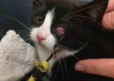 Móc bungee chọc vào mắt mèo